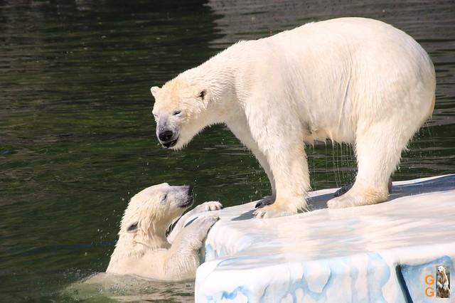Tierpark+Zoo Berlin 09.05.2020 Wassermark054