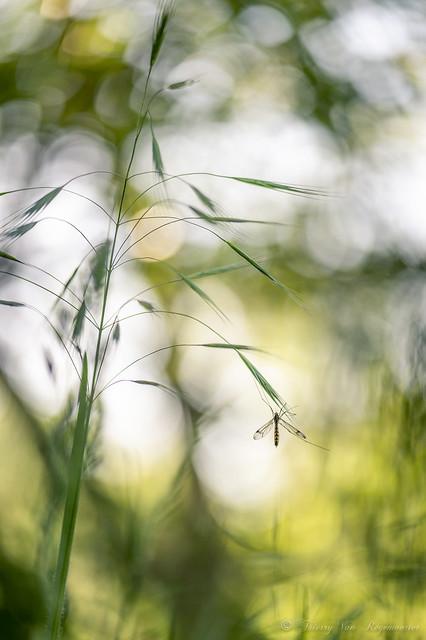 Moustique qui pique