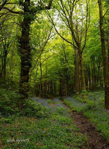 trees trails woodland walks landscapes yorkshire nature nikon