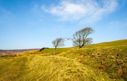 blue countryside fence field landscape scotland spring trees uk unitedkingdom wall clouds europe grass hills springtime preston england