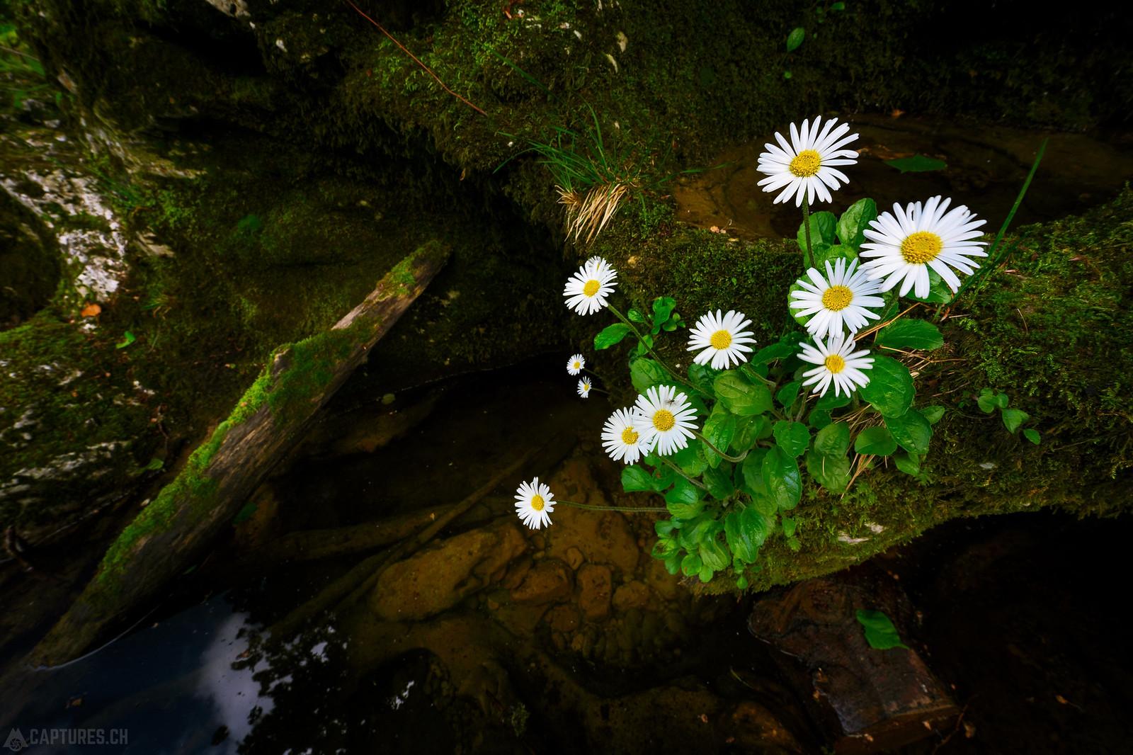 Flower - Orbe