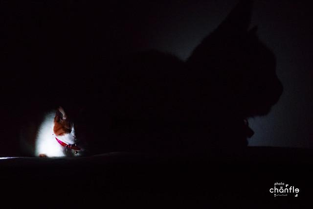 El vigilante de la noche, en ciudad Bogotá