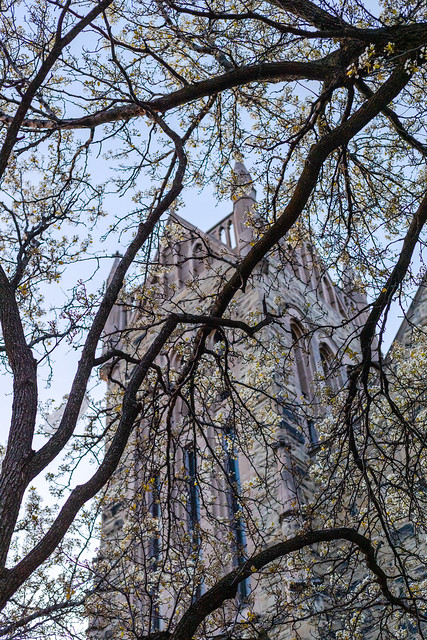 Blooming Church