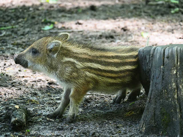 Wild Animal Park Alte Fasanerie in Hanau, Germany - May 12, 2020