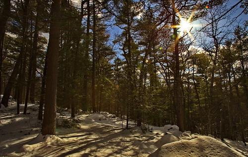 landscape forest woods nature usa massachusetts nationalpark winter sun snow