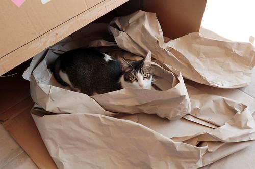 Kiwi + giant box