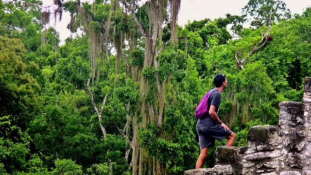 MEXICO, Mayastätte Calakmul, inmitten eines unendlich scheinenden Dschungels. verborgen, versteckt im tiefen Dschungel , Aufstieg  Struktur  2, 19743/12662