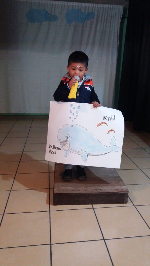 1° Preescolar, Los animales acuáticos