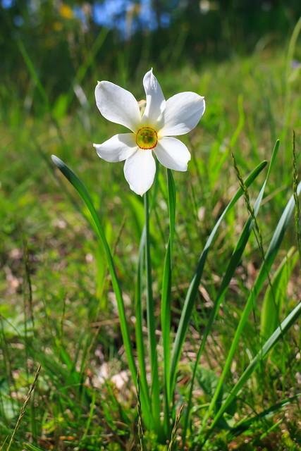 L'Ora del Narciso