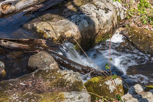 smack53 saffinpond mahlondickersonreservation jeffersontownship jefferson newjersey water springtime spring nikon z50 nikonz50