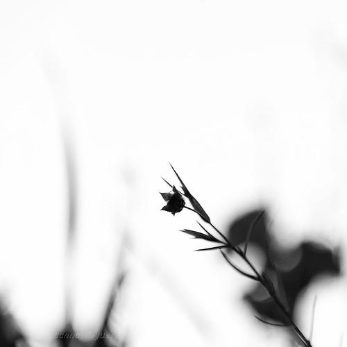 Forme d'erba