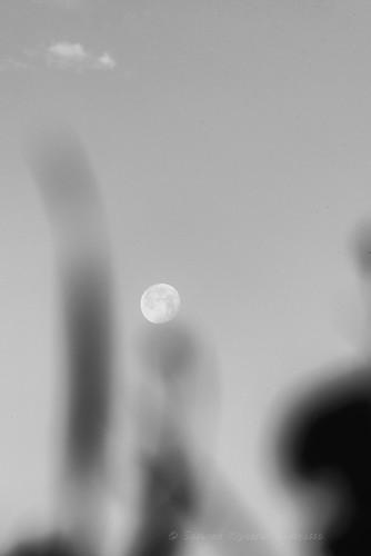 Flowers Moon