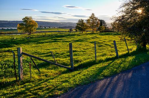 luminosity7 nikond850 launceston tasmania australia autumneveningapproaches sunsetshot shadows light landscape covid19 covertphotosdiary fairlands studfarm horses pbwa