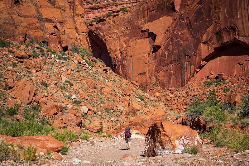 Towering Canyon Walls