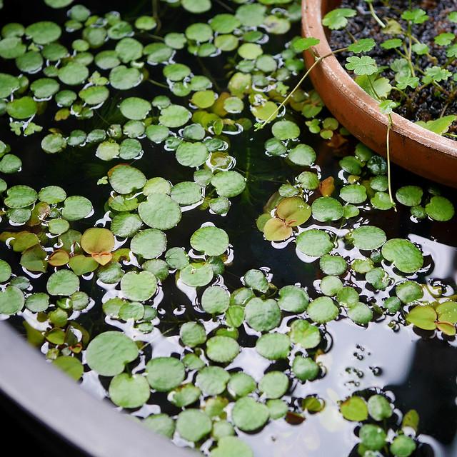 2160x2160 Mini Pond 20200512