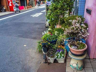 Nihon_arekore_02125_Ume_bonsai_1_100_cl