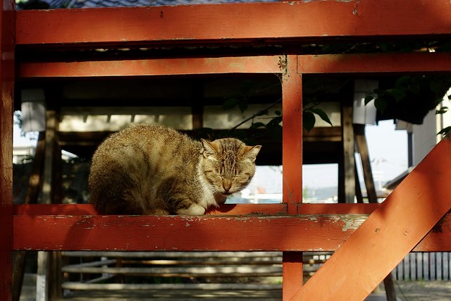 Today's Cat@2020ー05ー13