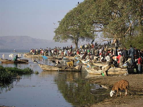 fishmarket market awassa ethiopia africa fish