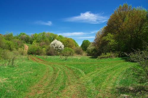 mountain road trees sky blue green nature landscape bulgaria