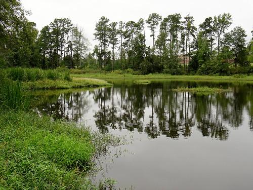 Bringle Lake