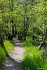Wanderung durch den Unterspreewald #1