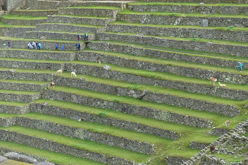 Terraced farming. From History Comes Alive at Machu Picchu
