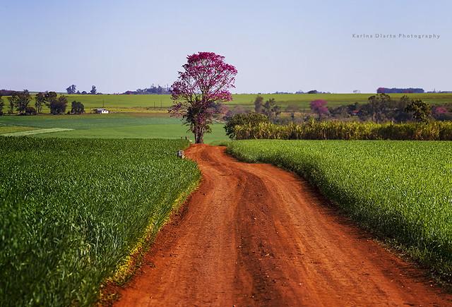 tierra colorada