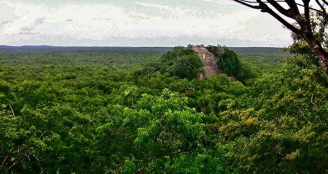 MEXICO, Mayastätte Calakmul, inmitten eines unendlich scheinenden Dschungels. verborgen, versteckt im tiefen Urwald , Blick auf die Struktur 1 die höchste Tempelpyramide, welche den  grünen Dschungel überragt , ein unbeschreiblicher Ausblick,  19746/12666
