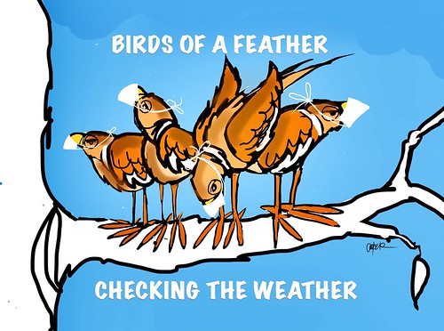BIRDS AND THE WEATHER
