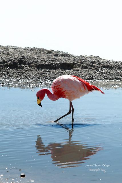 Laguna Colorada -