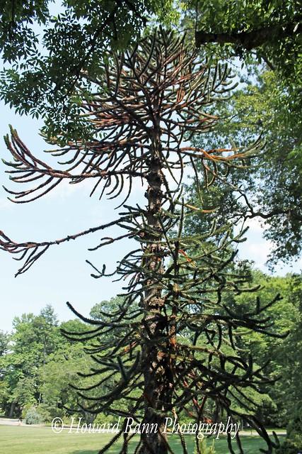 Barnes Arboretum (145)