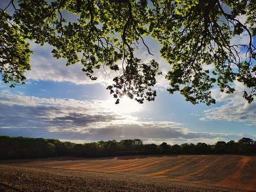 hertfordshire countryside home county landscape fields sun leaves treet green verdant agriculture arable huaweip20pro