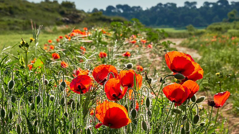 Recordando la primavera en Paisajes49891963667_5df9d1ab1a_c