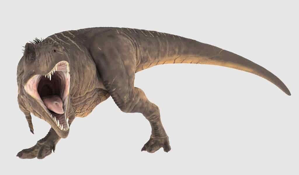 Les pattes des T. rex étaient faites pour le marathon