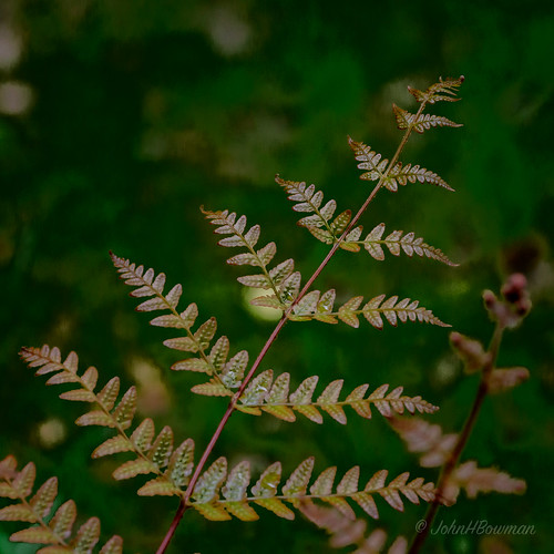 home ferns canon702004l2 virginia may 2020 flowersandplants chesterfieldcounty may2020