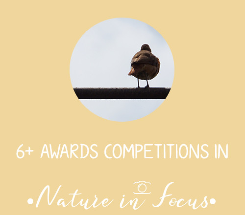 NatureinFocus06+Competitions
