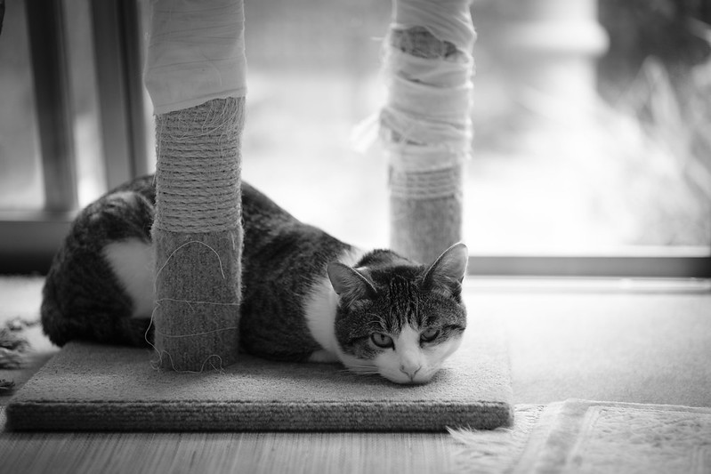 The cat tower with full-body wounds.