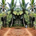 The Path into the Jungle