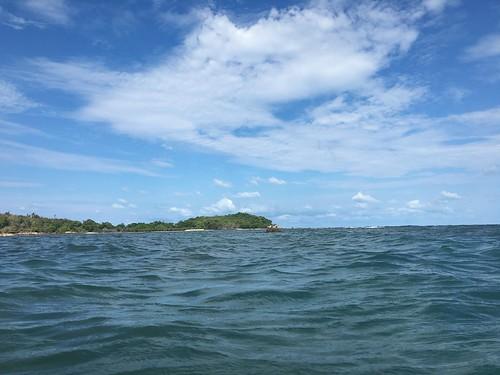 サムイ島見かけない鳥がいる