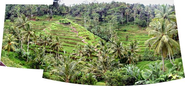 Teganungan Rice Terrace, Bali, Indonesia.
