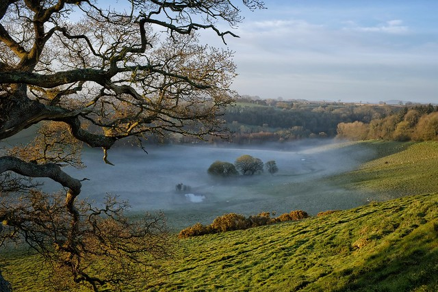 Mists in The Valley.