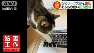 網路熱議!在家工作「不被被貓咪妨礙工作」的超簡單解決方法
