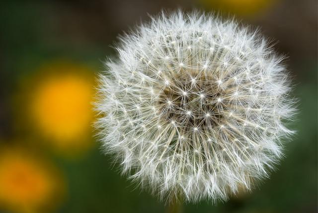 The flower of life - Die Blume des Lebens