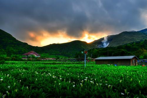 taiwan taipei yangmingshannationalpark sunrise cloud sky alocasia callalily flower 台灣 台北市 士林區 陽明山國家公園 竹子湖 海芋 晨曦