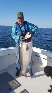 Photo of man holding huge striped bass he caught.