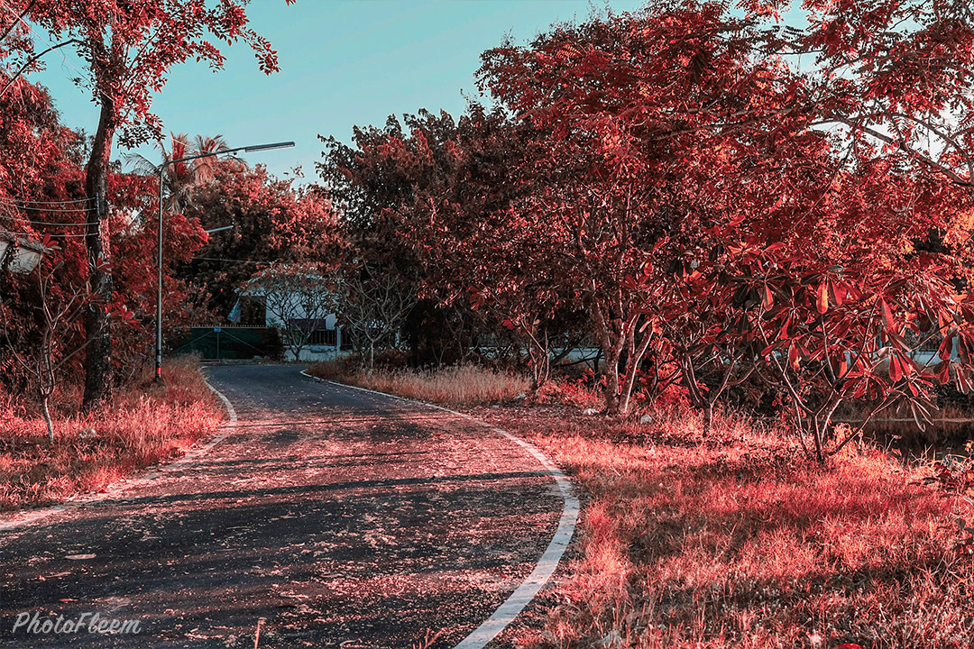 Lightroom-Green-to-red-06