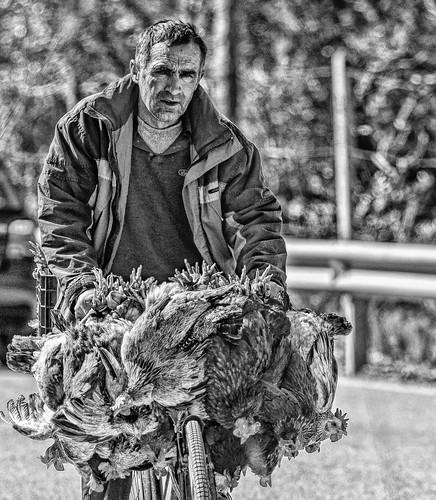 pulë chicken bike bicycle balkans elbasan albania vendor huckster