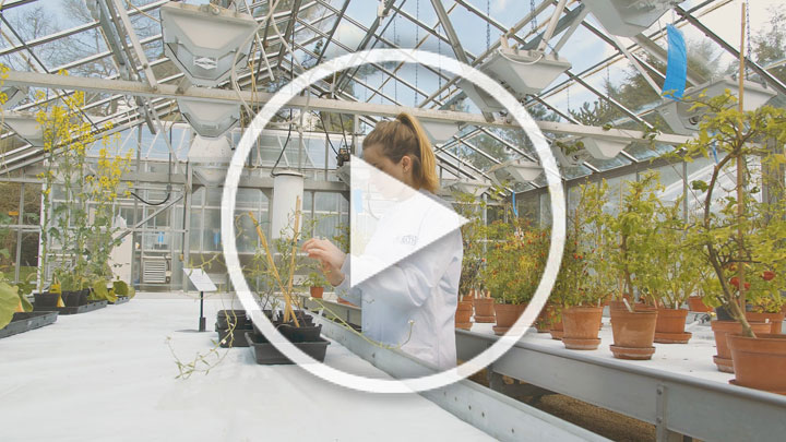 A student in the glasshouse