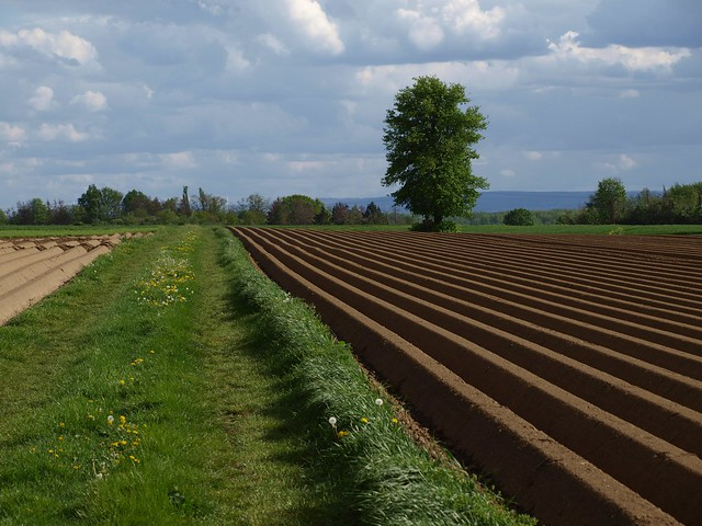 Felder im Rheinland