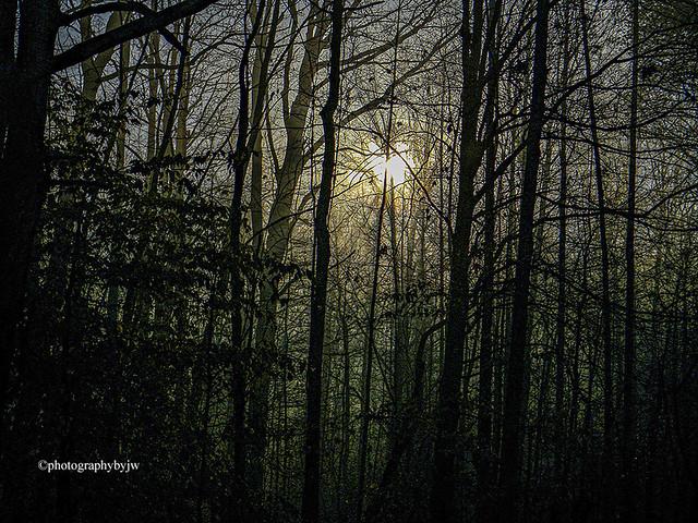Early Fog and Sun